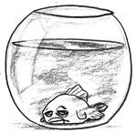 poisson au fond du bocal